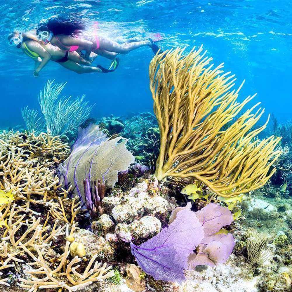snorkle-cayman